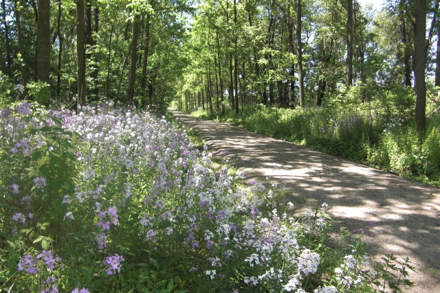 Rail Trail in bloom